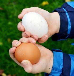 Kinderen rapen eieren op Lutje Zuuderham