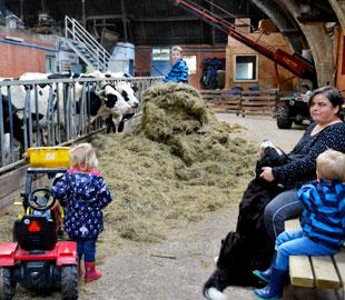 Gastouder Lutje Zuuderham met kinderen naar koeien kijken