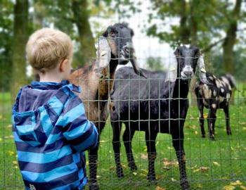 Kinderopvang Westerkwartier kind geiten boerderij